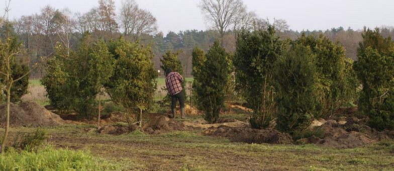 Baum-umzug-bio_gärtnerei