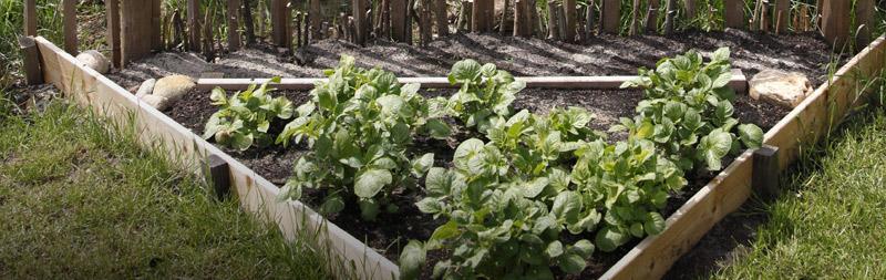 bio-gärtnerei-gemüsegarten-plain