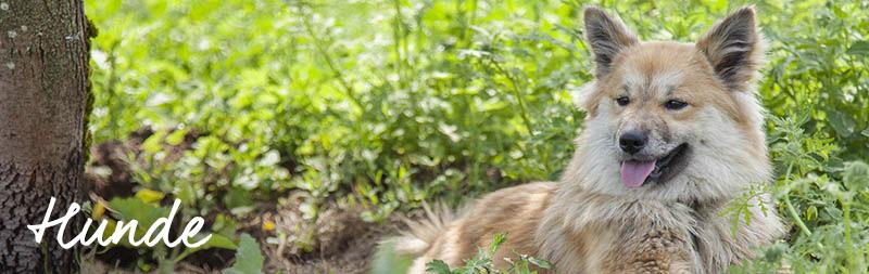 bio-gärtnerei-hunde