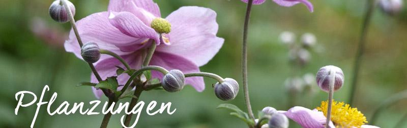 bio-gärtnerei-pflanzungen