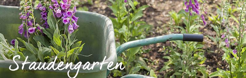 bio-gärtnerei-staudengarten
